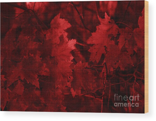 Leaf Wood Print featuring the photograph Old Red by Marjorie Imbeau