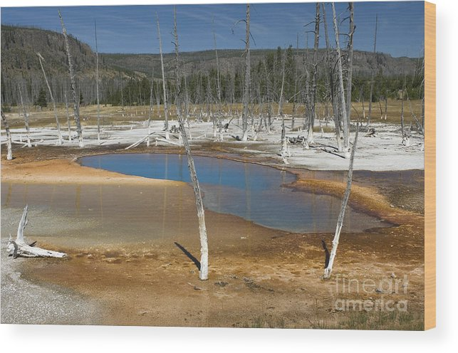 Bronstein Wood Print featuring the photograph Opalescent Pool Of Yellowstone by Sandra Bronstein