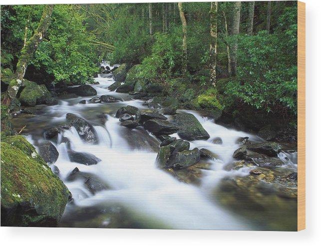 Creek Wood Print featuring the photograph Owengarriff River, Killarney National by Richard Cummins