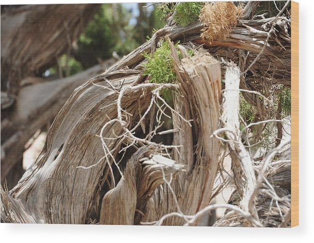 Tree Wood Print featuring the photograph Pain by Profulla Robert