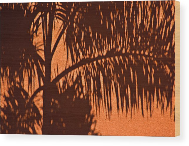 Palm Frond Wood Print featuring the photograph Palm Frond Abstract by Carolyn Marshall