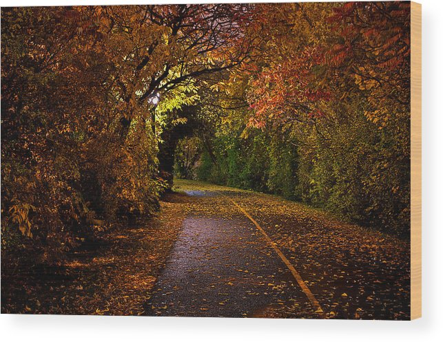 Path Wood Print featuring the photograph Path At Night by Andre Faubert
