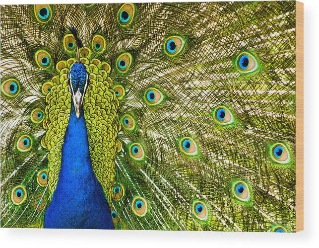 Assiniboine Park Wood Print featuring the photograph Peacock by Chris ODonoghue