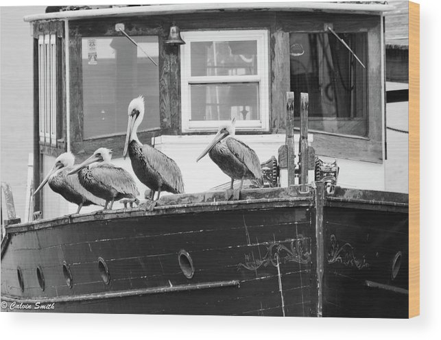 Wood Print featuring the photograph Pelicans by Calvin Smith