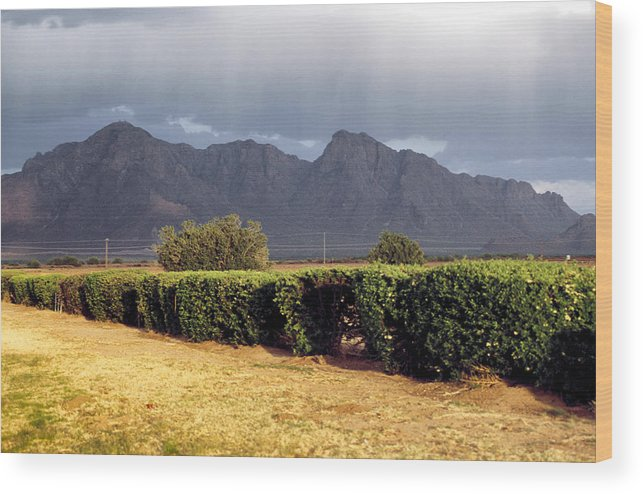 Picacho Peak Wood Print featuring the photograph Picacho Peak Hedge by Robert Schambach