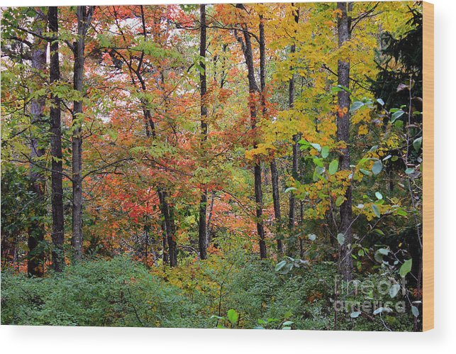 point Beach State Forest Wood Print featuring the photograph Point Beach State Forest by Christopher J Franklin