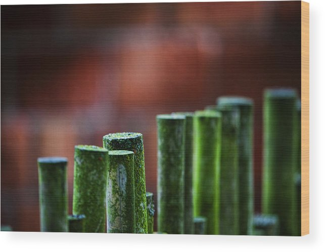 Bamboo Wood Print featuring the photograph Red And Green Too by Karen Ulvestad