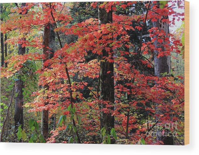Red Wood Print featuring the photograph Red by Christopher J Franklin
