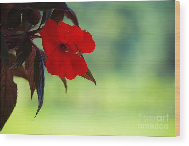 Red Hanging Plant Wood Print featuring the photograph Red Hanging Plant by Derek Pisieczko