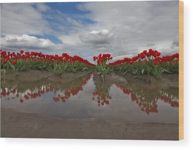 Tulips Wood Print featuring the photograph Red Tulip Reflections by Karla DeCamp