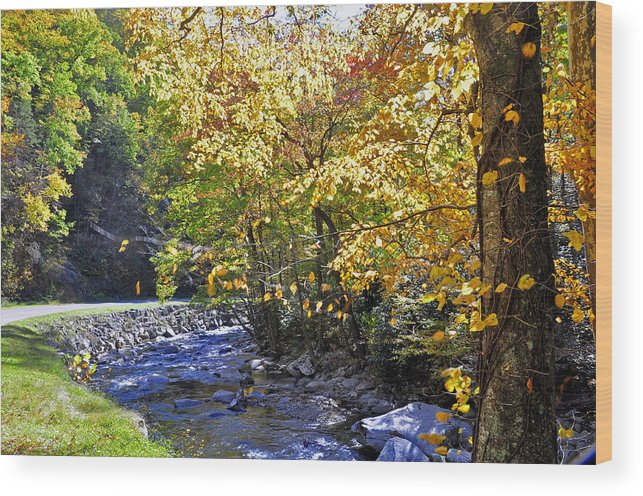 Tennessee Wood Print featuring the photograph Road To Cades Cove by Helen Haw