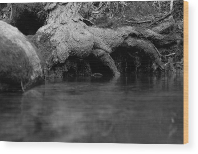 Landscape Wood Print featuring the photograph Rooting For The Depths by Jessica Priebe
