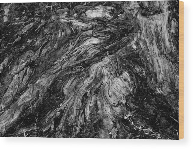 Roots Wood Print featuring the photograph Roots Black And White by Paulette Thomas