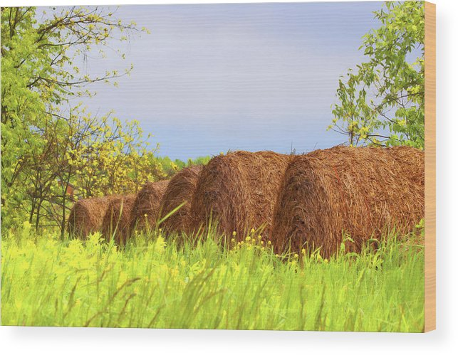 Agriculture Wood Print featuring the photograph Round Bales by Tom Mc Nemar