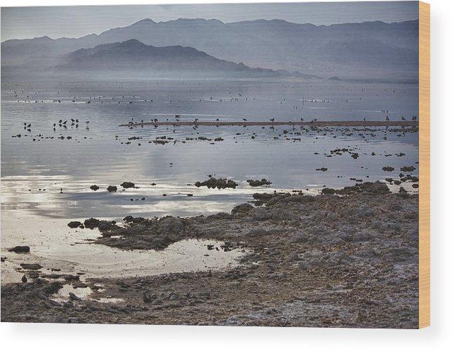 Seagulls Wood Print featuring the photograph Salton Sea Birds by Linda Dunn