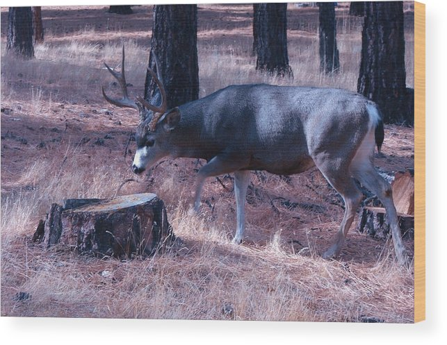 Deer Wood Print featuring the photograph Seeking A Love For Two by Elgin W Cannon