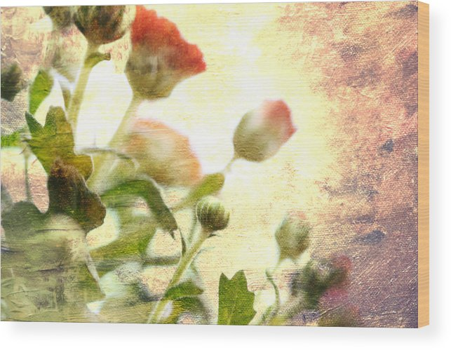 Mums Wood Print featuring the photograph Spotlight Mum by Charrie Shockey