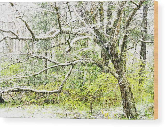 Williams River Wood Print featuring the photograph Spring Snow Along Williams River Scenic Byway by Thomas R Fletcher