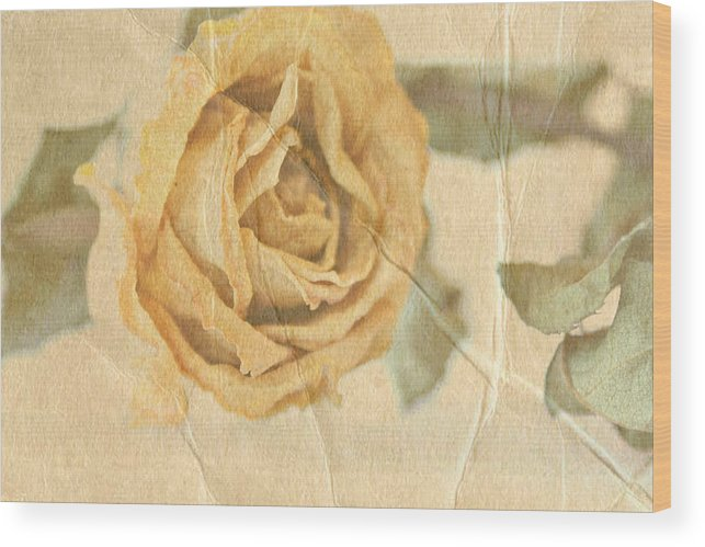 Rose Wood Print featuring the photograph Still With You by Deborah Hall Barry