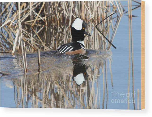 Hodded Wood Print featuring the photograph The Dance by Lori Tordsen