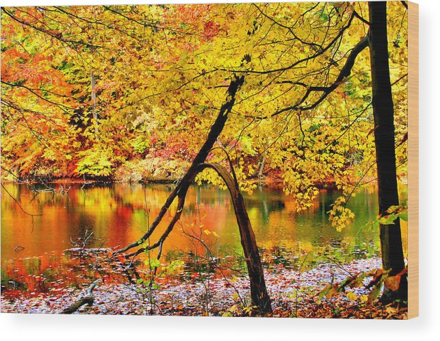 Autumn Wood Print featuring the photograph The Final Bough by Kristin Elmquist