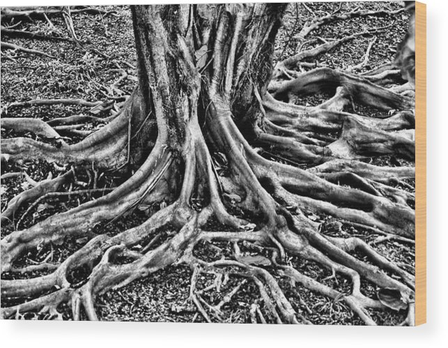 Root Wood Print featuring the photograph The Root by Ekojanu Sp