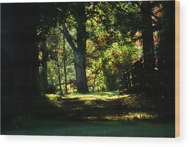 Autumn Wood Print featuring the photograph The Way To The Old Tree by Emanuel Tanjala