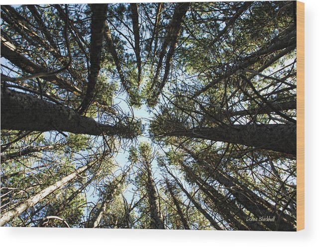 Trees Wood Print featuring the photograph Things Are Looking Up by Donna Blackhall