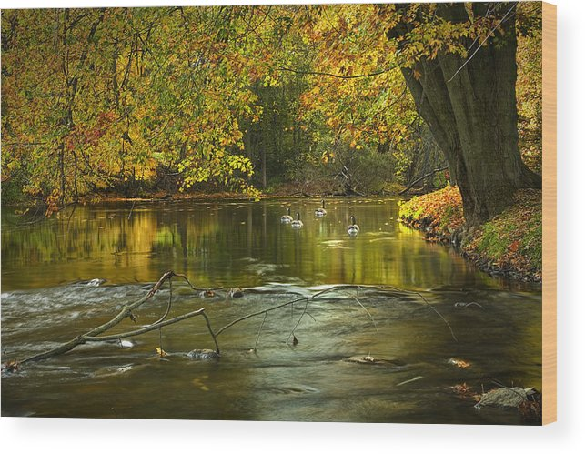 Thornapple River In October No 0009 Wood Print