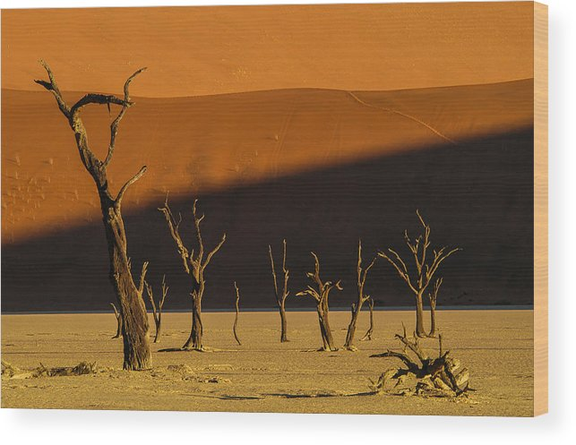 Africa Wood Print featuring the photograph Tree Family by Alistair Lyne