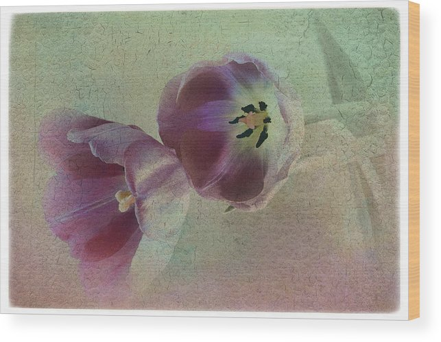 Florals Wood Print featuring the photograph Tulip Reflections by Linda Dunn