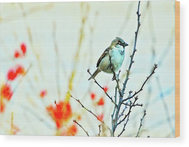 Adorable Wood Print featuring the photograph Valentine Sparrow by Artistic Photos