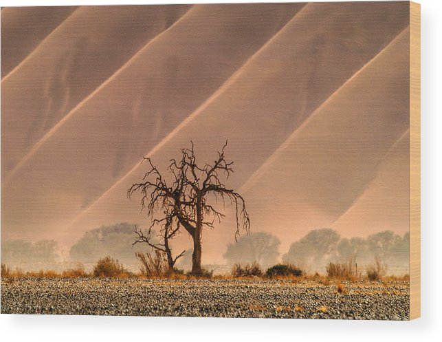 Africa Wood Print featuring the photograph Wave Tree by Alistair Lyne