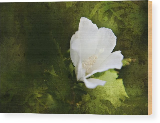 Background Wood Print featuring the photograph White Flower Texture by Malania Hammer