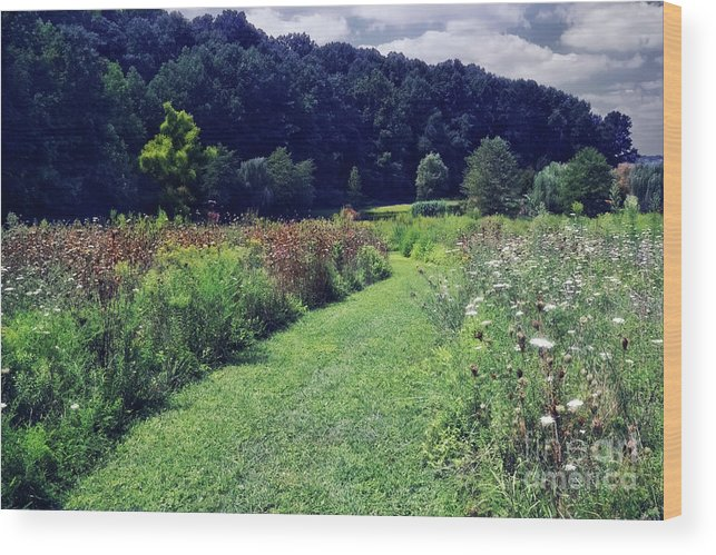 Garden Wood Print featuring the photograph Wildflower Field Evening by Susan Isakson