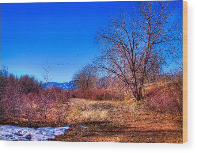 Denver Wood Print featuring the photograph Winter In South Platte Park by David Patterson