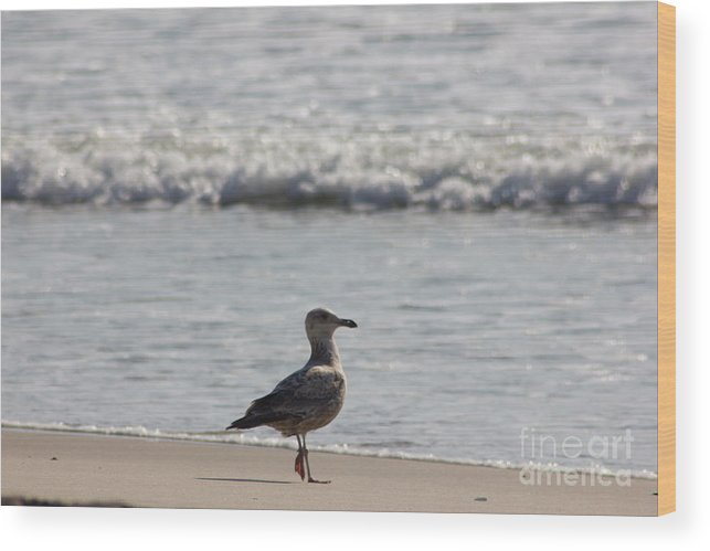 Wounded Seagull 3 Wood Print featuring the photograph Wounded Seagull 3 Hurt Standing On One Leg Beach Photograph Art Seascape Bird Birds Beaches Sea Pics by Al Nolan