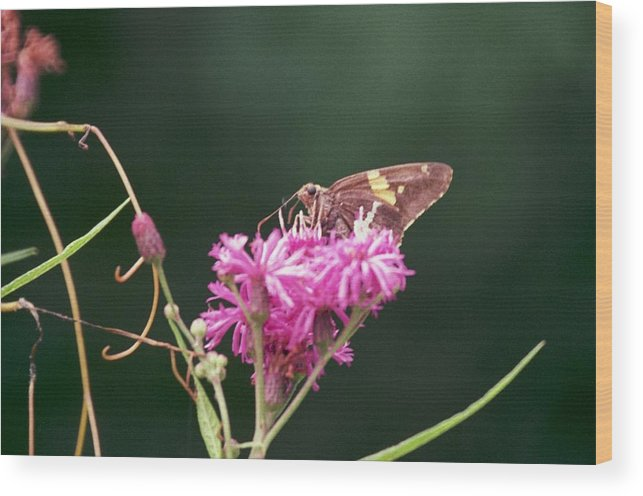 Butterfly Wood Print featuring the photograph 072106-19 by Mike Davis