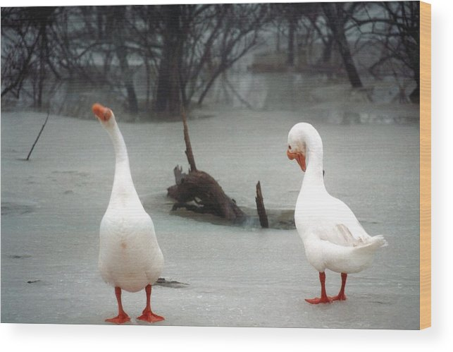 Goose Wood Print featuring the photograph 072506-11 by Mike Davis