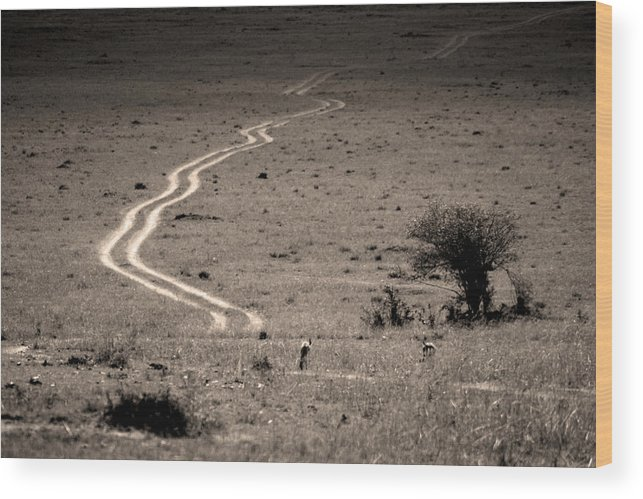 Roads Wood Print featuring the photograph 08007 by Jeffrey Freund