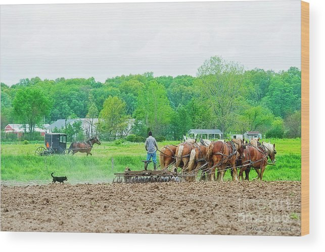 Amish Wood Print featuring the photograph Amish Boy Disking by David Arment