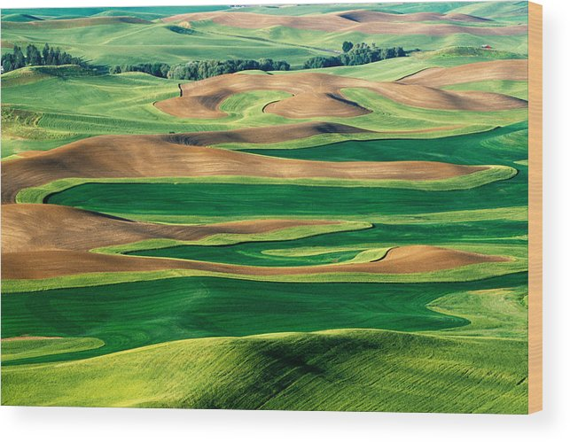 Washington Wood Print featuring the photograph Field Of Green by Eggers Photography