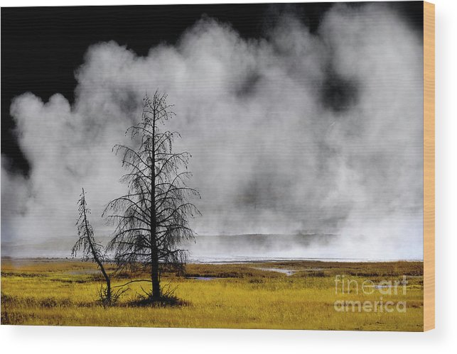Backlit Wood Print featuring the photograph Geysers And Steam Rising In Yellowstone National Park by Lane Erickson