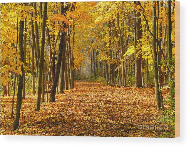 Foliage Wood Print featuring the photograph Golden Days by Neil Doren