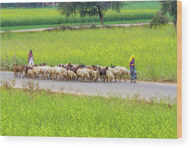Animals Wood Print featuring the photograph Indian Villagers Herding Sheep. by Nila Newsom