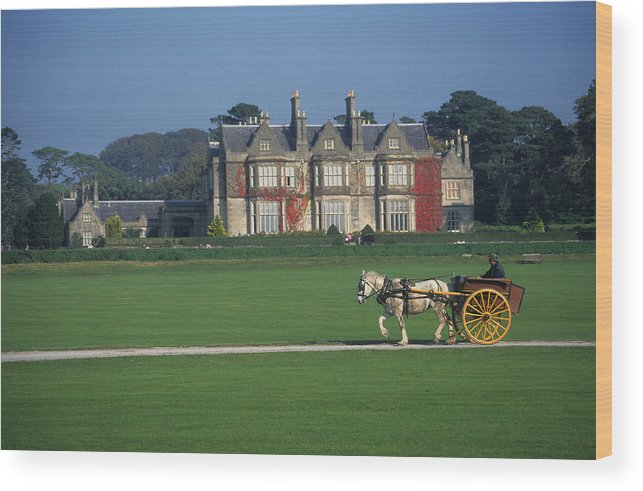 Horse Wood Print featuring the photograph Jaunty Cart At Muckross Manor by Carl Purcell