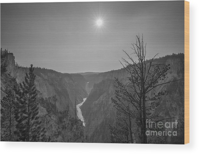 Yellowstone Wood Print featuring the photograph Lower Yellowstone Falls by Michael Ver Sprill