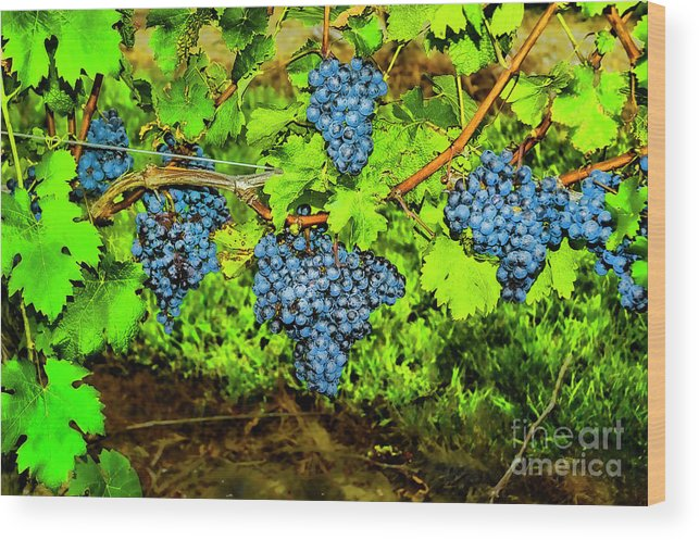 Grapes Wineries Rhode Island Wood Print featuring the photograph Lucious Grapes by Rick Bragan