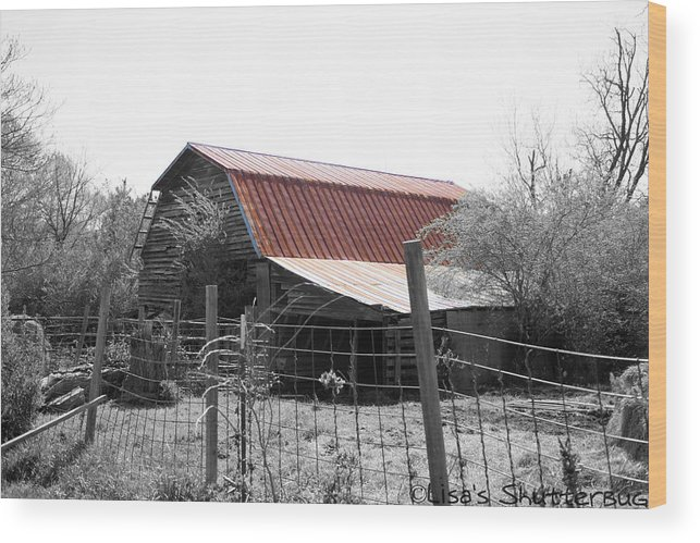 Wood Print featuring the photograph Mcdonald 3 by Lisa Johnston