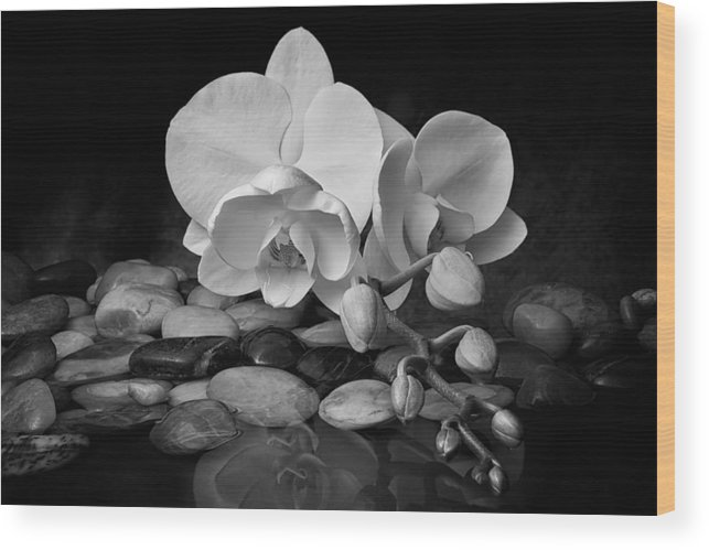 Arrangement Wood Print featuring the photograph Orchid - Sensuous Virtue by Tom Mc Nemar